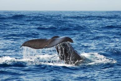 Balenes a Nova Zelanda