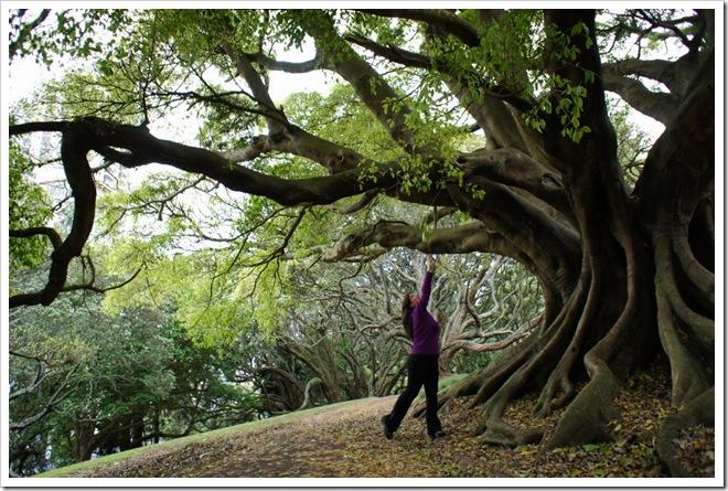 nova zelanda auckland park