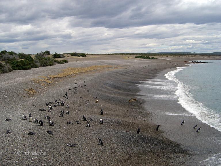 argentina pinguins 04