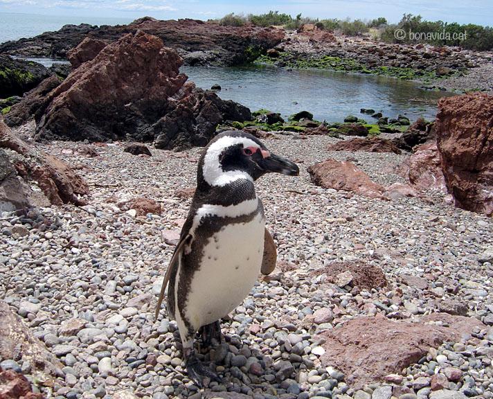 argentina pinguins 07