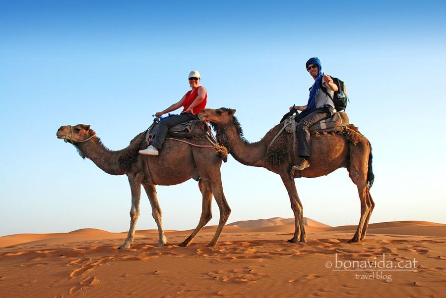 El dromedari, el millor transport possible. Semblem uns tuaregs de pacotilla...