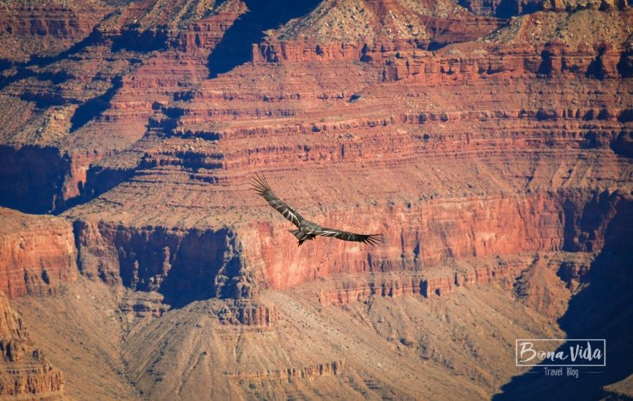 usa grand canyon-21