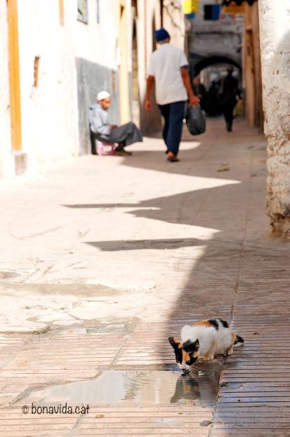 Marroc Essaouira gat