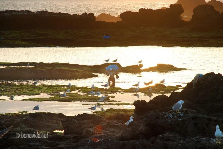 Pescadors al capvespre