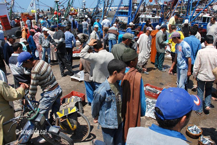 La venda de peix omple el port