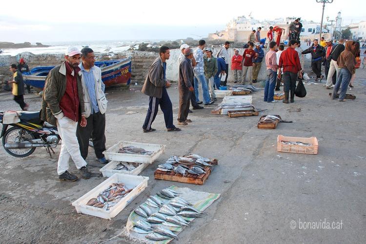 marroc essaouira venda peix 01
