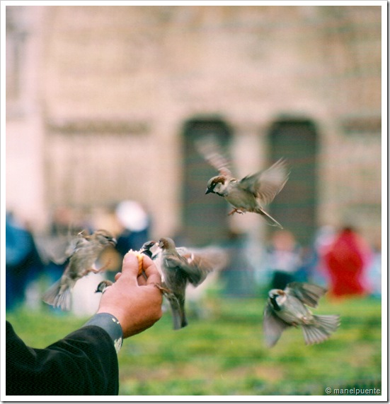 paris ocells