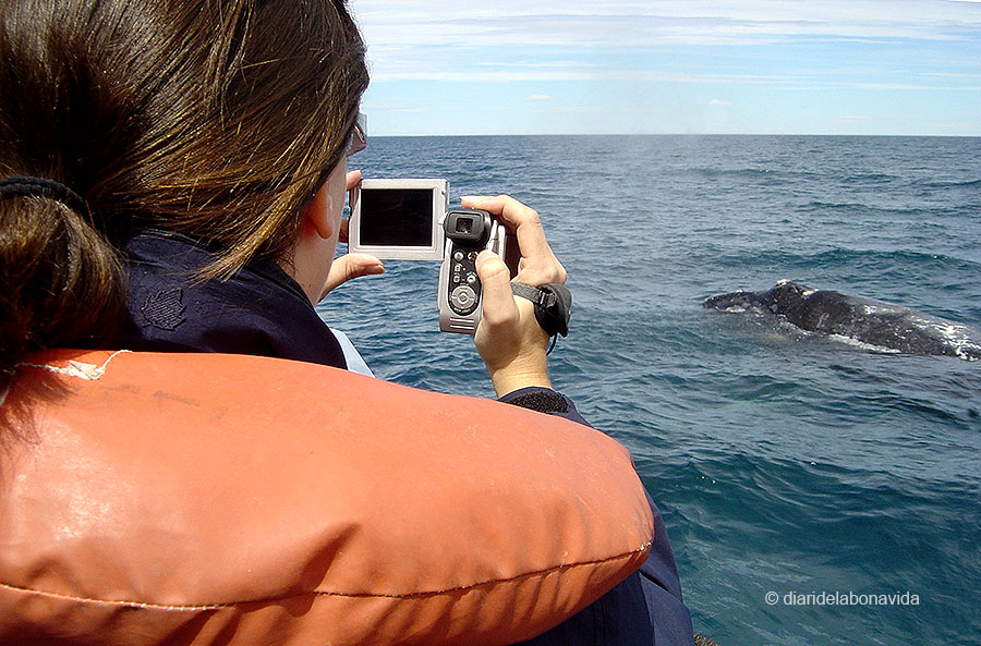 whale_argentina_4