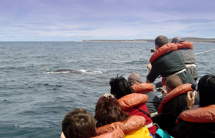 whale_argentina_6