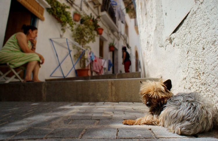 ibiza dalt vila gos