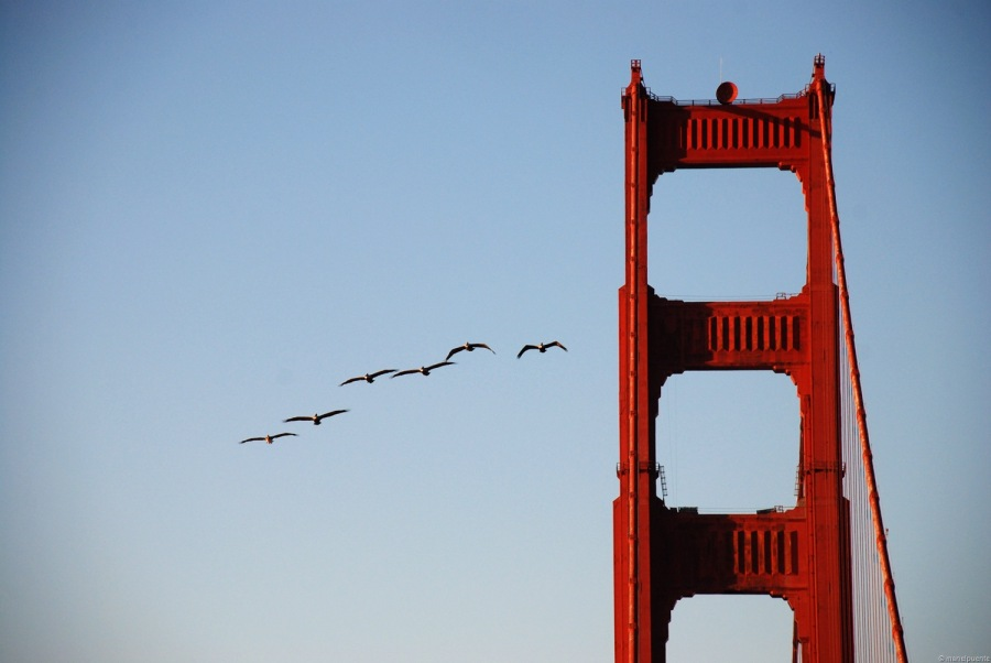 Golden-Gate_04.jpg