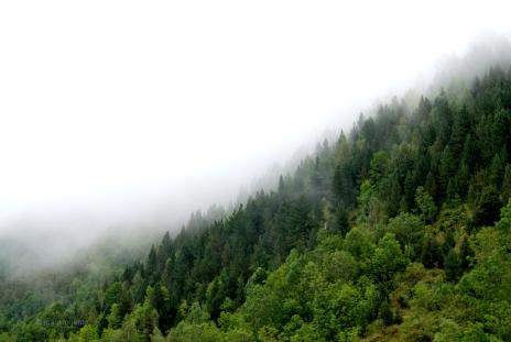 Boira als boscos del Ripollès.