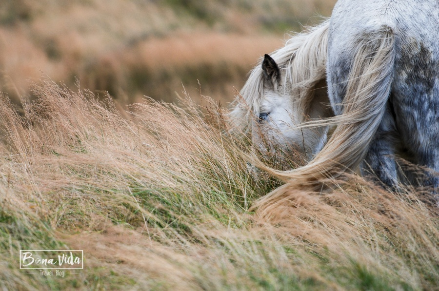 islandia cavalls-13