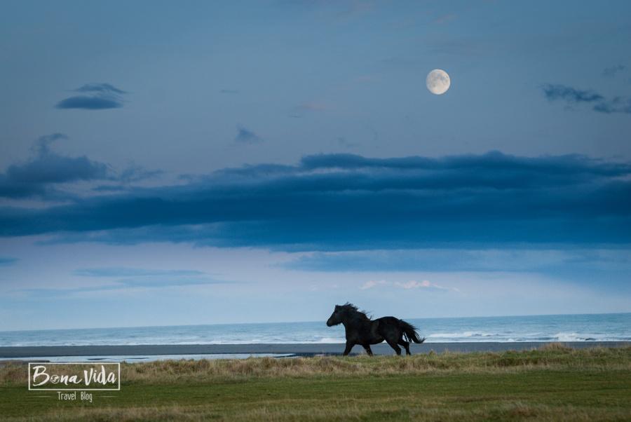 islandia cavalls-2