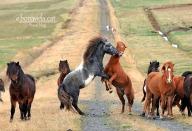 islandia cavalls grup