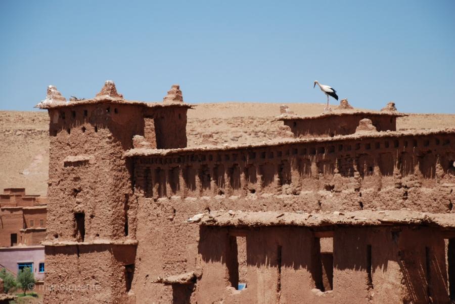 marroc Ait Benhaddou 06