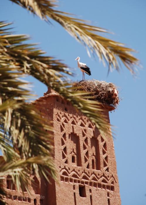 marroc Ait Benhaddou 20