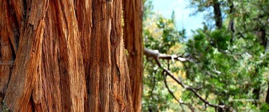 arbre_yosemite_01
