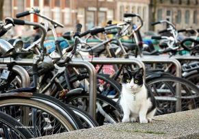 gat_bicis_amsterdam