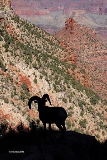 grand_canyon_usa_02