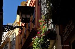 Les balconades plenes de flors són tot un símbol sevillà com aquestes al carrer d' Álvarez Quintero
