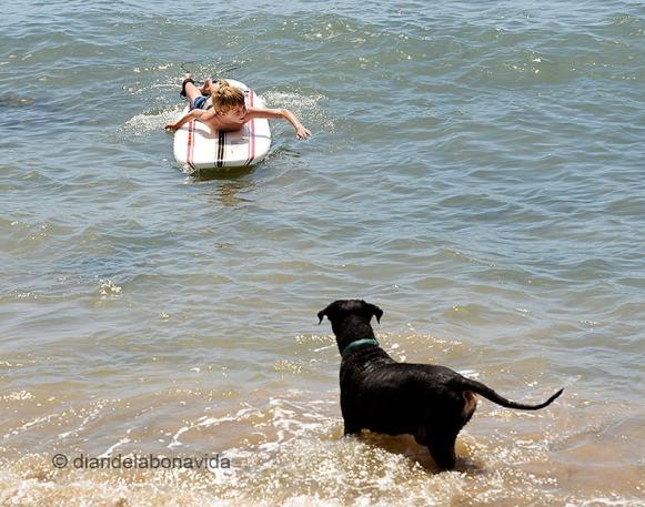 Grans, petits, animals... Tothom gaudeix del mar