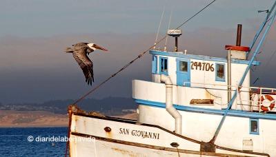 Port de Monterey