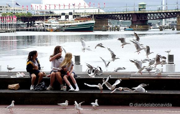 La suma de nens, gavines i menjar, ja ens produeix la imatge abans que aquesta passi. Sydney