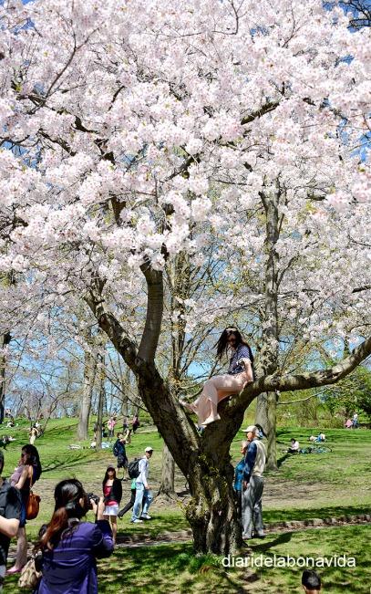 Alguns no dubten fins i tot a pujar a l'arbre per tenir una foto