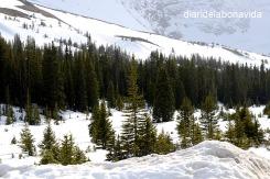 No hem pogut accedir a certs llocs per la neu, però el paisatge que deixava era fantàstic