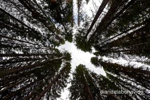 Els boscos són impressionants