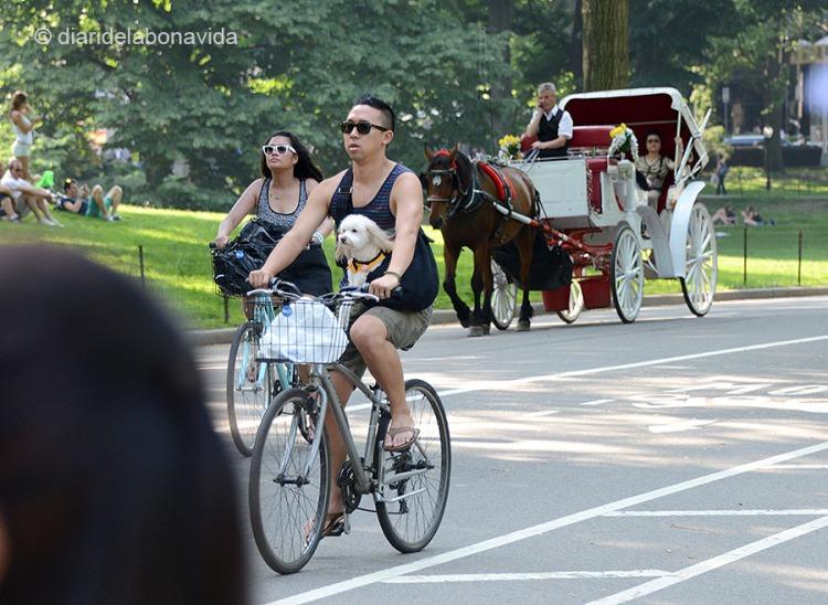 newyork0365_central park