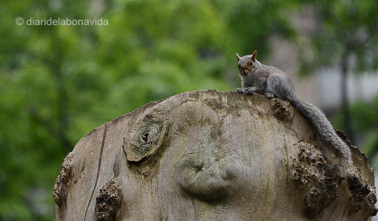 newyork0568_squirrel