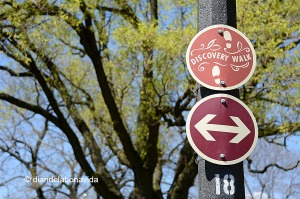 canada2650_budapest park