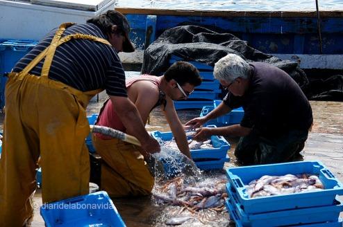 Un cop arriben a port, netegen tot el peix