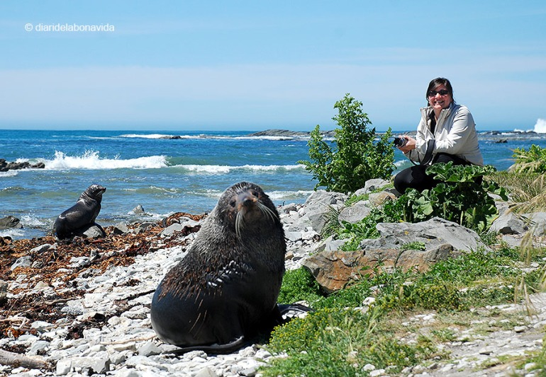 Preparats per la foto. Nova Zelanda