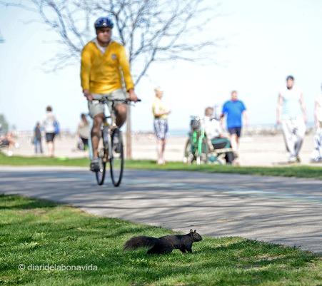 Ciclistes, patinadors, corredors, esquirols... tothom practica esport