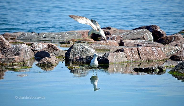 Les aus ocupen una petita part de la platja