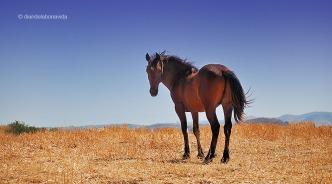 Els cavalls són els reis del paisatge àrid de l'interior