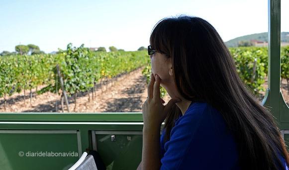 Passegem entre camps de vinyes