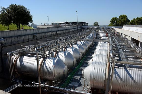 Uns enormes recipients ajuden a la primera fermentació del most