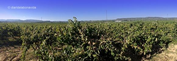 Les vinyes ocupen tota la nostra visió