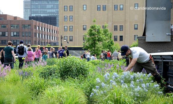 Els jardiners i voluntaris del Parc cuiden i mimem les moltes varietats de plantes que podem trobar