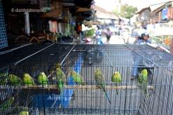 indonesia_malang pasar senggol periquitos
