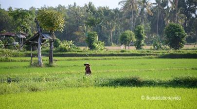 indonesia_3046