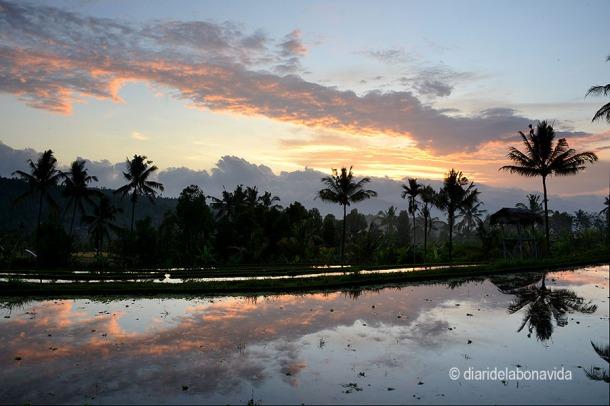 Veure la posta de sol sobre els camps d'arròs a Indonèsia és genial!!