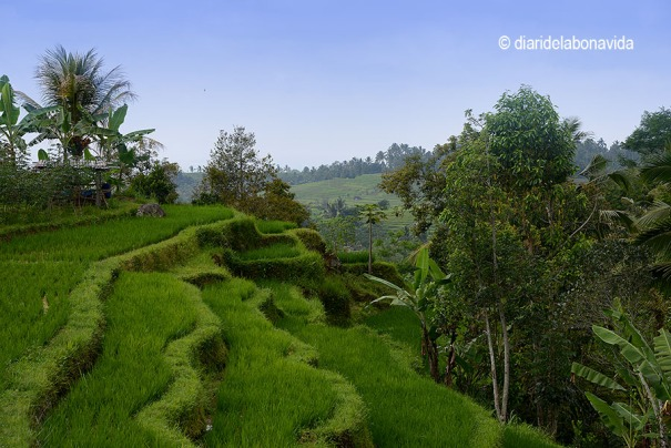 indonesia_3261