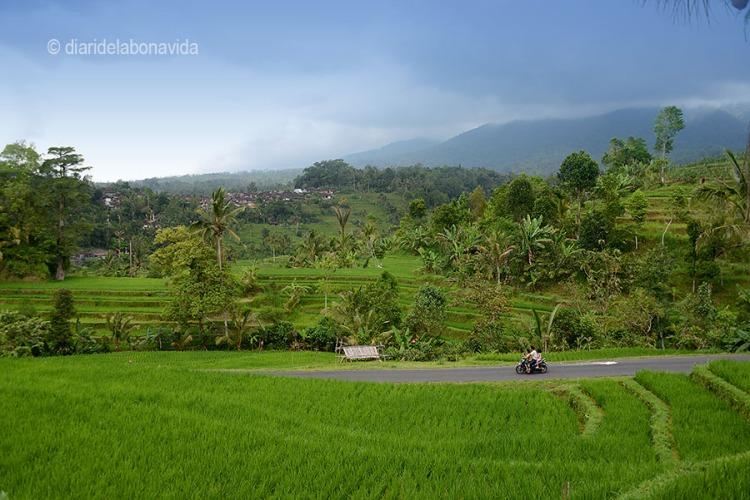 indonesia_3264