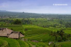 indonesia_3286