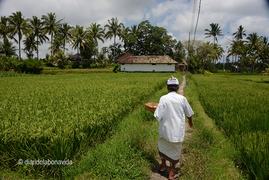 indonesia_3394